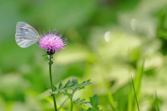 綺麗な野の花